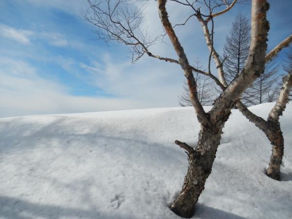 雲取山 055