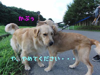 100805_お散歩3