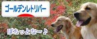 にほんブログ村ゴールデンのページへGO!