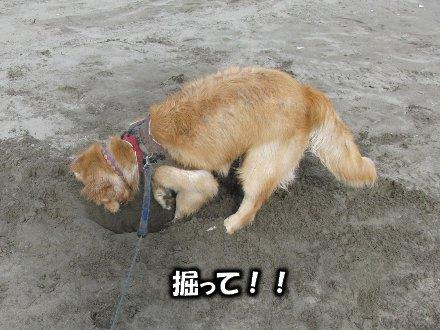 掘って!!