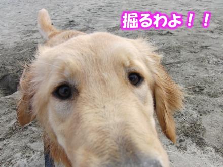掘るわよ!!JPG