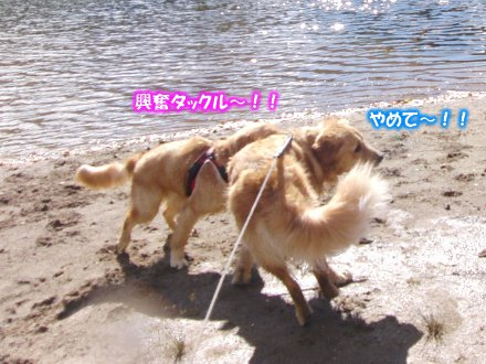 CIMG7719.jpg