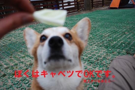 11_04_039.jpg