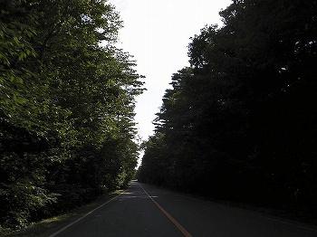 aokigahara1204_10.jpg