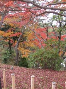 円山公園秋2