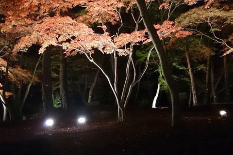 長瀞紅葉ライトアップ