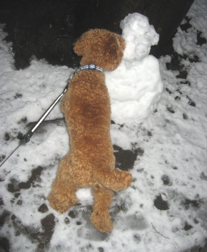 snow 2228