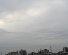 tara011.jpg