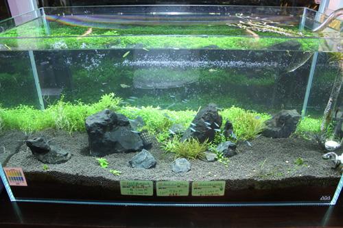 後景草はグロッソww ではなくお店の外からも見れます^^ 東海 岐阜 熱帯魚 水草 観葉植物販売 Grow aquarium