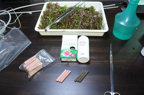 いい肥料があるのです。 東海 岐阜 熱帯魚 水草 観葉植物販売 Grow aquarium