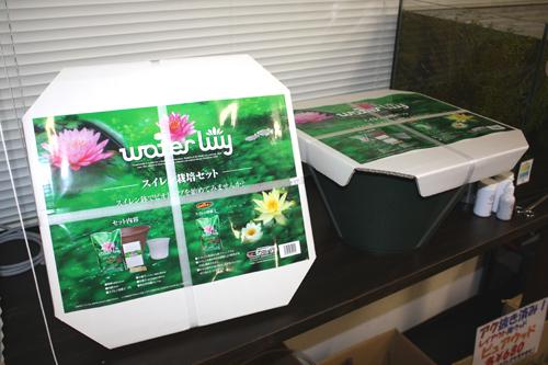 スイレン栽培セット スイレン鉢セット 東海 岐阜 熱帯魚 水草 観葉植物販売 Grow aquarium