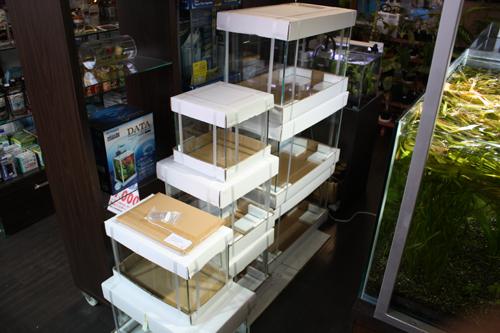 キューブガーデン、キューブグラス 東海 岐阜 熱帯魚 水草 観葉植物販売 Grow aquarium
