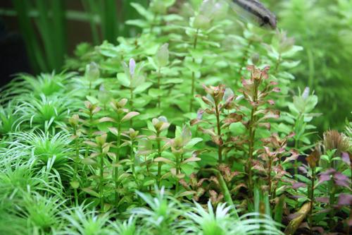 水草も販売。東海 岐阜 熱帯魚 水草 観葉植物販売 Grow aquarium