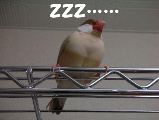 やっぱり眠いんじゃん