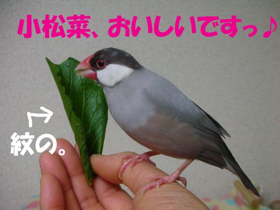 あれっ、京???(^_^;)