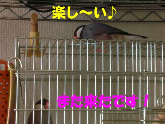 京の部屋の屋根