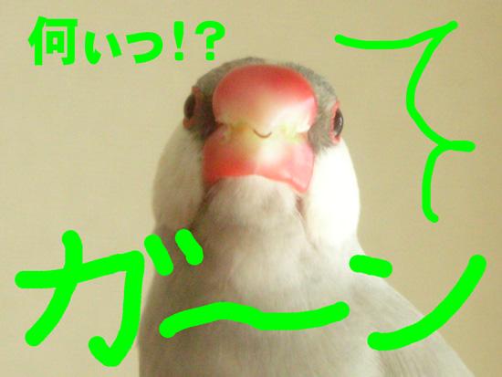 銀、ショック!!