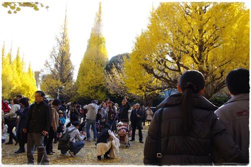 072神宮外苑201011127