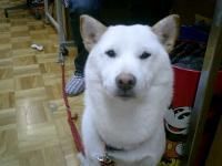 momo・003_convert_20100912203508