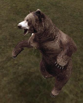 荒ぶるクマたん