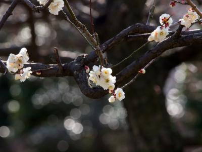 薫る梅の花