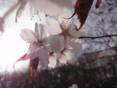 花見オフ 031