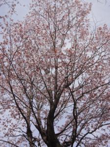 花見オフ 036