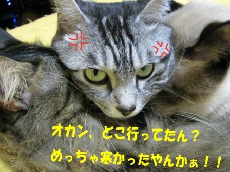 cats2013 267