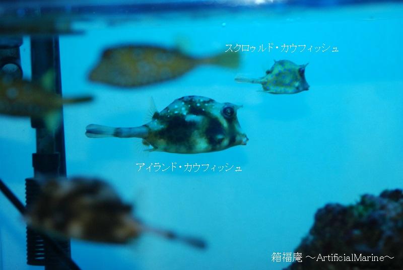 DSC_2229.jpg
