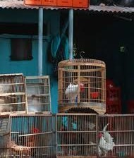 鳥の店インドネシア