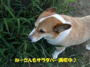 006_convert_20110902002703.jpg