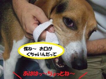 009_convert_20110910001853.jpg