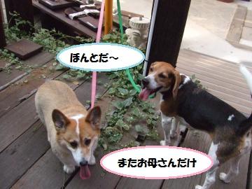 010_convert_20110902002813.jpg