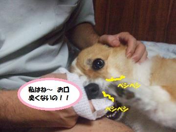 015_convert_20110910002138.jpg