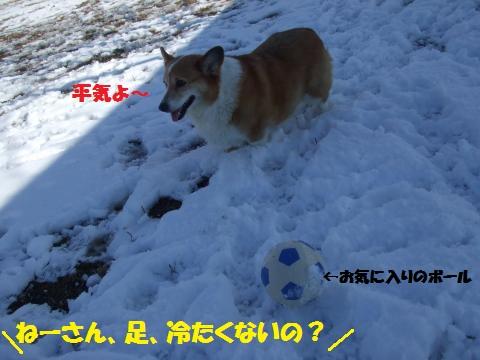 017_convert_20130201032141.jpg
