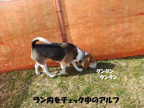 018_convert_20130217041210.jpg