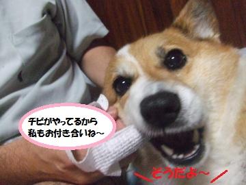 020_convert_20110910002220.jpg