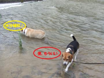 030_convert_20110905001749.jpg