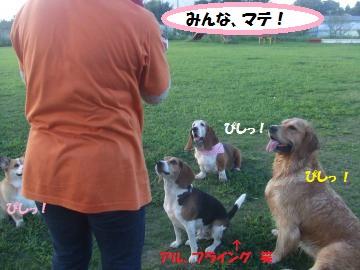 039_convert_20110912231142.jpg