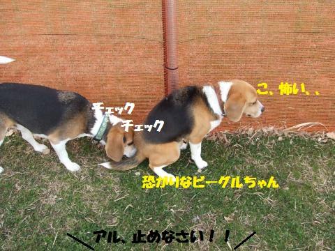 102_convert_20130217042729.jpg