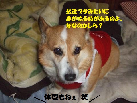 133_convert_20130220002053.jpg