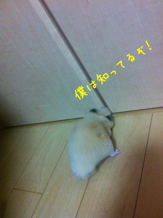 iphone_20110505220236.jpg