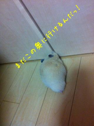 iphone_20110505220306.jpg