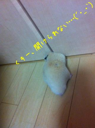 iphone_20110505220321.jpg