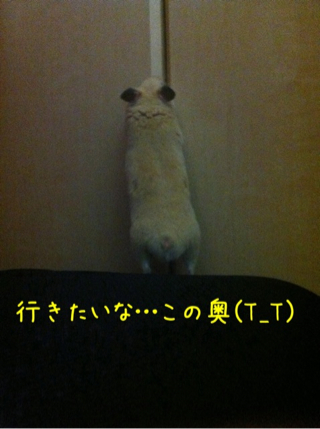 iphone_20110505220339.jpg