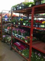 春の花出荷1