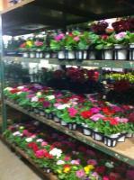 春の花出荷2