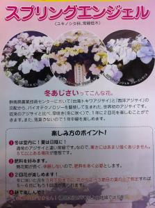 冬に花が咲くアジサイ説明書
