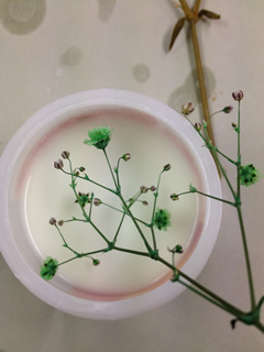 お花をルミナスフラワー液につけます