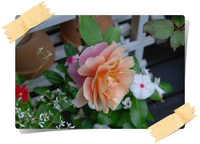 15_20101016171823.jpg